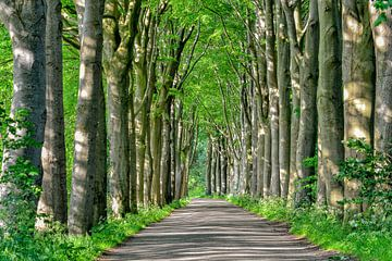 Allee mit Bäumen von Richard van der Woude