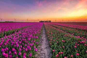 Tulpenveld in Flevoland van Dennisart Fotografie