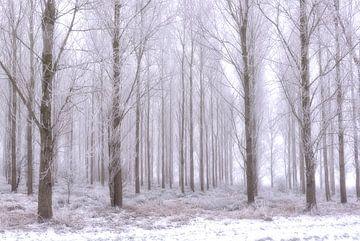 Bomen in rijp. van Sigrid Westerbaan