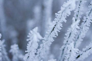 Schneeflocke, Ausschnitt aus einem Winterfoto von Karijn Seldam