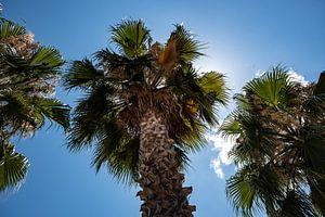palmboom3 van Nienke Stegeman