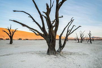 Skeleton Forest van Joris Pannemans - Loris Photography
