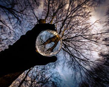 Lensball in het bos van Jeffrey van Roon