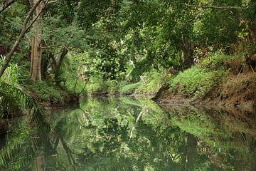 Mangrove Damas Island Costa Rica von Ralph van Leuveren