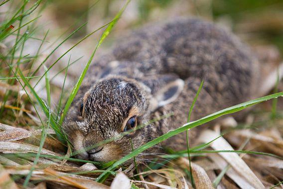 Wild baby konijntje in het gras