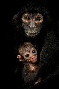 Mutter Kolumbianischer Pendelaffe mit Kleiner von Amanda Blom