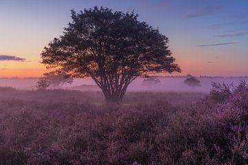 Nebliger Morgen auf der Zuiderheide in Hilversum von Michiel Dros