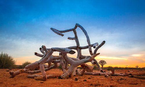 Afgebroken takken van de kokerboom in de woestijn, Namibië