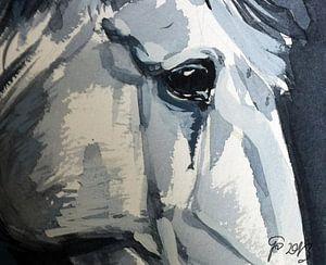 Pferde blick näher von