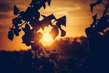 Sonnenaufgang durch die Bäume von Stedom Fotografie