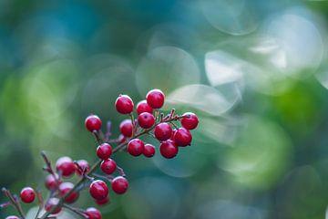 Bokeh-Beeren von Tania Perneel