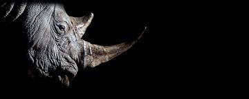 Rhino van EK Photography