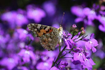 Distelvlinder op het paars van Shirley Douwstra