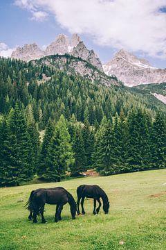 Friesen in den Alpen von Patrycja Polechonska