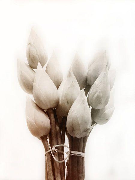 Lotus Vintage von Jacky Gerritsen