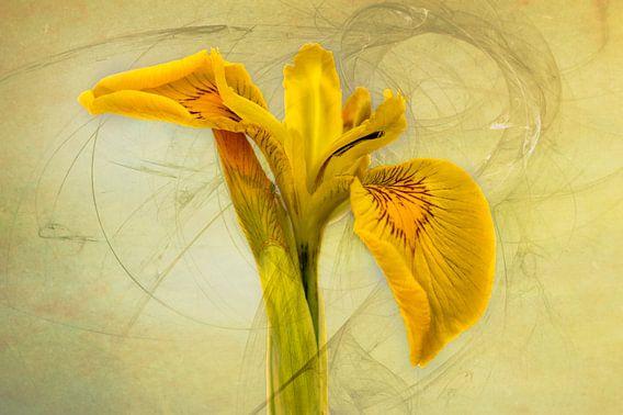 Konings Python - Gele Lis