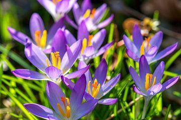 lente in mijn tuin von Hanneke Luit
