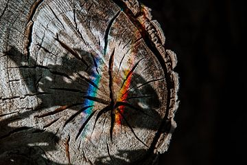 Structuur van een stam van Willeke Photography