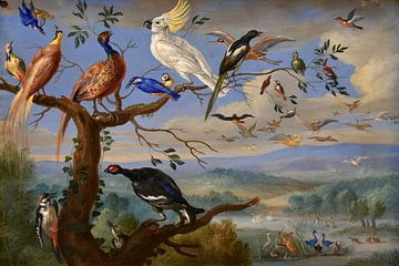 Oiseaux exotiques Brafa, Jan van Kessel sur