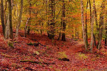 Herbstlicher Wald von Gea Gaetani d'Aragona