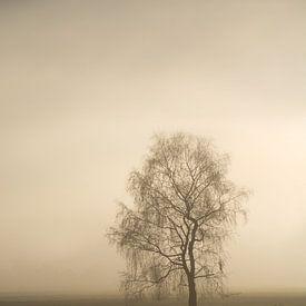 November Sun von Lena Weisbek