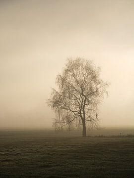 November Zon van Lena Weisbek