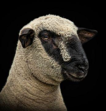 Schaf von Marjolein van Middelkoop