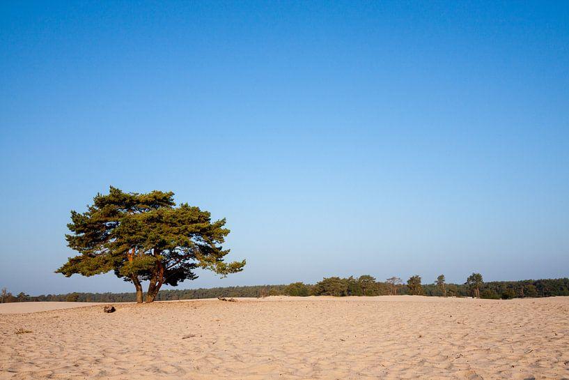 Soesterduinen boompje van Ramon Bovenlander