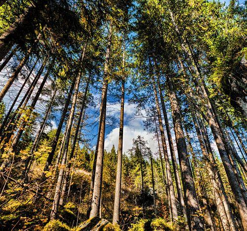 Kijkend door het bos