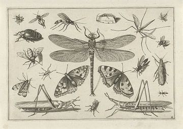 Insectes, Jacob Hoefnagel, d'après Joris Hoefnagel