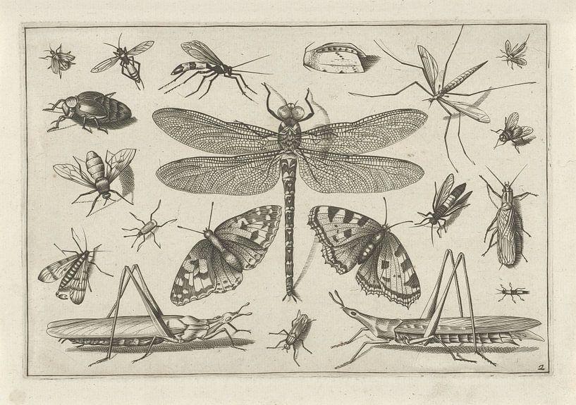 Insects, Jacob Hoefnagel, na Joris Hoefnagel van Botanische Prenten