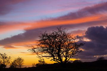 Silhouet van een boom bij zonsondergang van Discover Dutch Nature