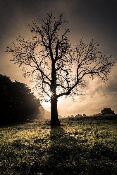 Leafless tree in front of sunrise sur Boy  Driessen