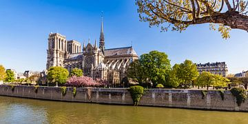 Notre-Dame in Parijs van Werner Dieterich
