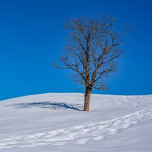 Un arbre solitaire dans la neige sur Koos SOHNS   (KoSoZu-Photography)