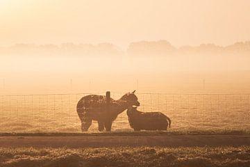 Lama / Alpaka zusammen mit einem Schaf im Nebel von Miranda Heemskerk
