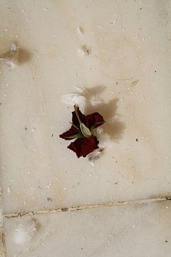 Rode roos, verdord van Jetty Boterhoek