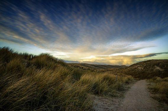 De Noordzee duinen
