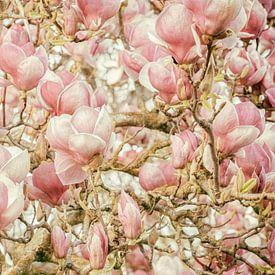 Magnolie von Lars van de Goor