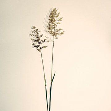 Gras stengels 2 van Douwe Beckmann