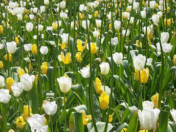 Bloemen van Veli Aydin