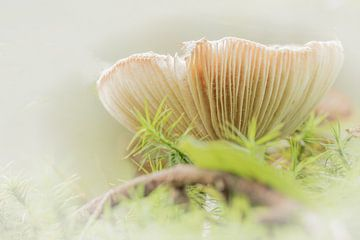 Pastell-Pilz von Yvonne Blokland