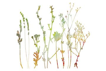 Zomer in het weiland. Wilde bloemen en planten. Botanische illustratie van