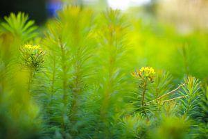 Dreamier Greeneries