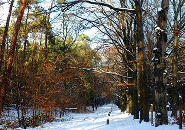 Winters bos van M de Vos