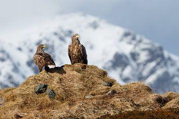 Weißkopfseeadler-Paar auf dem Aussichtspunkt von Karla Leeftink
