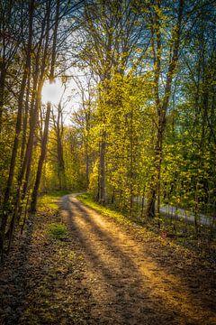 eenzaam bospad beschenen door zonnestralen in de lente van Dieter Walther