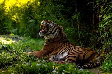 Brüllender Tiger von UniQaps