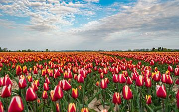 Tulpen von Arjen Uijttenboogaart