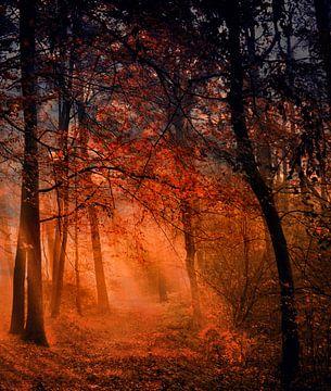 Morgens im Wald van